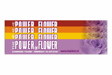 The power of flower